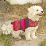 Köpek Kıyafeti Modelleri