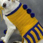 Köpek Süveteri Modelleri